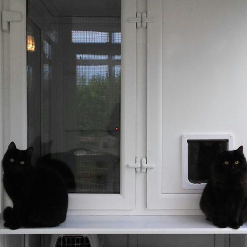 Ciaran & Dusty – Cats – Siblings