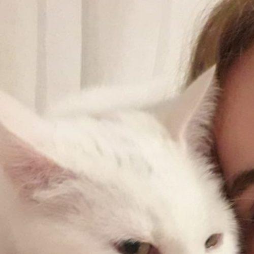 Queenie – Cat